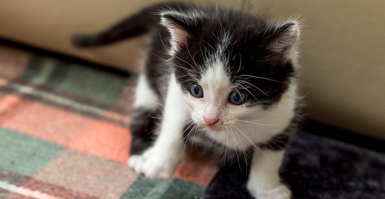 Babykatzen-2044_2018_10_01-5472-x-3648