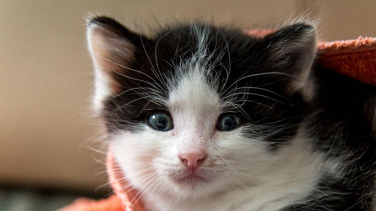 Babykatzen-2055_2018_10_03-5472-x-3648