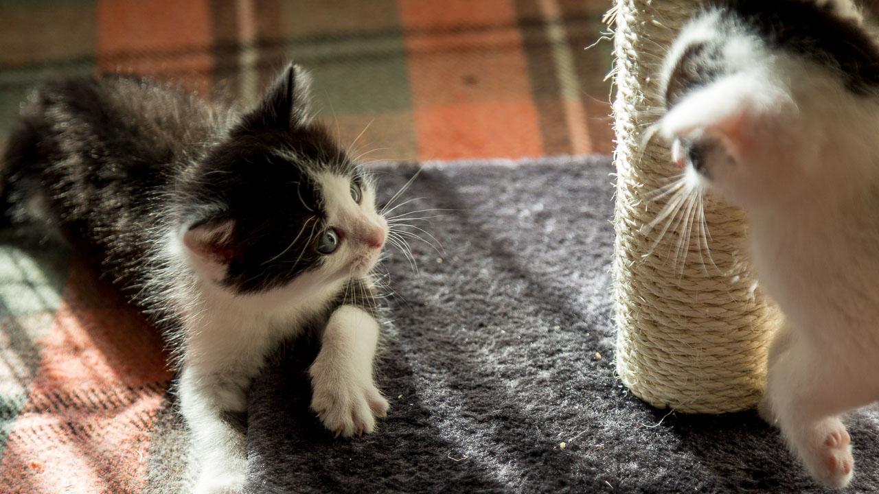 Babykatzen-2245_2018_10_06-5472-x-3648