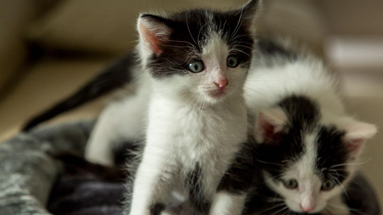 Babykatzen-2254_2018_10_06-5472-x-3648