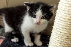 Babykatzen-2042_2018_10_01-5472-x-3648