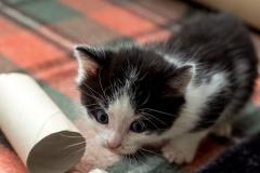 Babykatzen-2045_2018_10_01-5472-x-3648