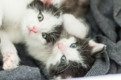 Babykatzen-2068_2018_10_03-5472-x-3648