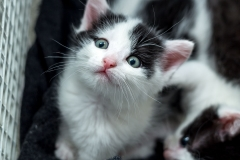 Babykatzen-2071_2018_10_03-5472-x-3648