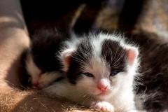 Katzenbabys-1813_2018_09_16-5472-x-3648